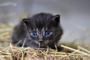 התקנת עיני חתול